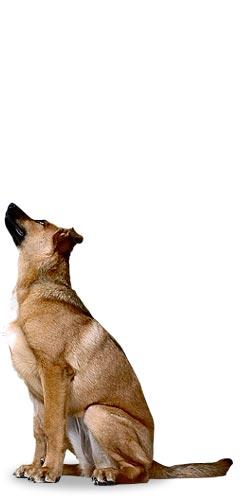 Tierschutzverband Niederösterreich Tierschutz Tierschützer